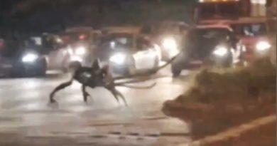 Verdadeiro ou Falso? Uma estranha criatura espalhou o pânico na cidade de Ilhéus, na Bahia?